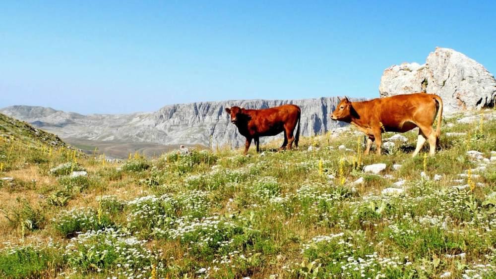 Κτηνοτροφικά_προϊόντα_ντόπια_κρέατα_ήπειρος_ιωάννινα